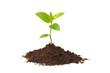 Leinwandbild Motiv Young plant