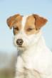 Portrait d'un petit chien calme et docile