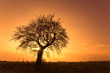 Silhouette of a willow tree with the sun behind the tree