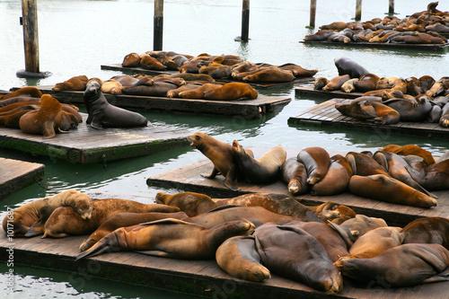 Keuken foto achterwand San Francisco otaries et phoques