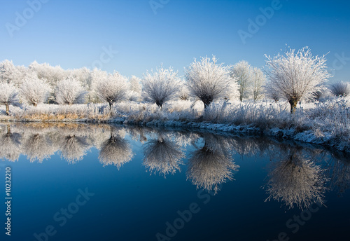 Foto op Canvas Bleke violet frost and a blue sky