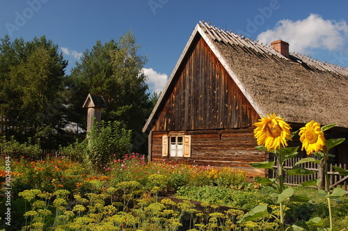 Wooden Cottage with sunflowers in front #10240494
