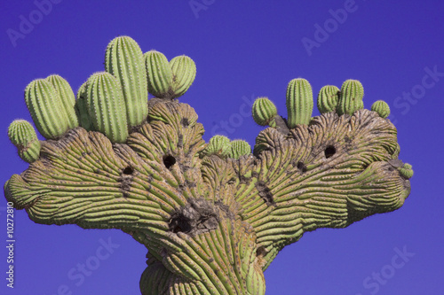 Papiers peints Cactus Desert Cactus
