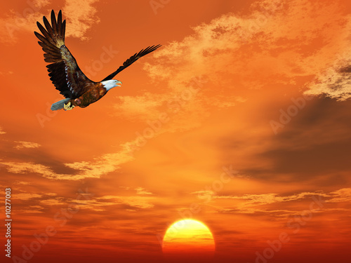 Foto op Plexiglas Volle maan Eagle flying on a background of the sunset sky