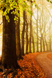 canvas print picture - autumn colors in the forest