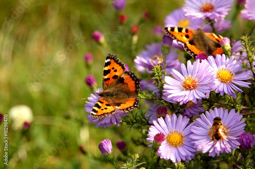 Fotobehang Vlinder butterfly on flowers