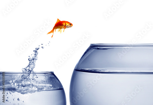 Fotomural .goldfish jumping out of the water