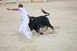 Ein einzelner Stier beim Kampf mit Matador in der Arena