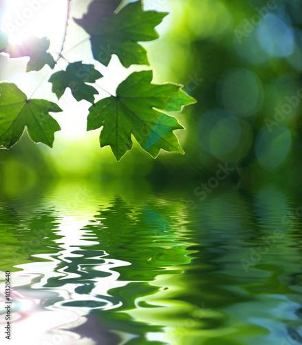 Foto-Schiebegardine ohne Schienensystem - green leaves (von Pakhnyushchyy)
