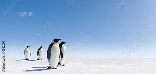 Foto auf AluDibond Pinguin Emperor Penguins in Antarctica