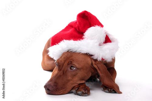 Photo Tierisches Geschenk Weihnachten