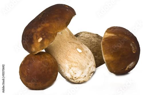 Fotografie, Obraz  trio de cèpes