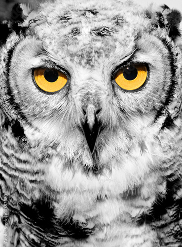 Wall Murals Hand drawn Sketch of animals Portrait of owl with yellow eyes