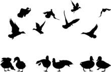 Mallard Duck Silhouettes Colle...