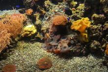 Coral Reef In Acquarium Of Gen...