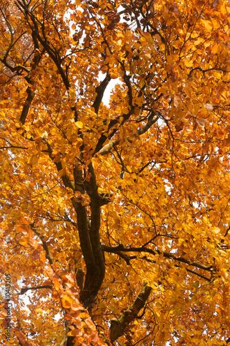 Tuinposter Hout Blätter im Herbst