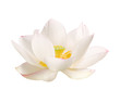 canvas print picture - lotus bluete weiss