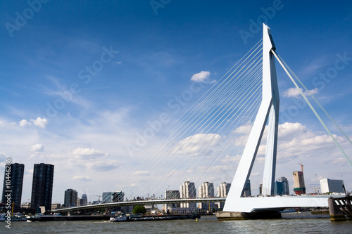Canvas Prints Swan Meuse River and Erasmus Bridge (Rotterdam, Holland)