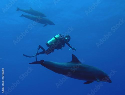 Obraz na plátně dolphin
