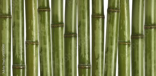 grzywny-obraz-roznych-bambusa-charakter-tla