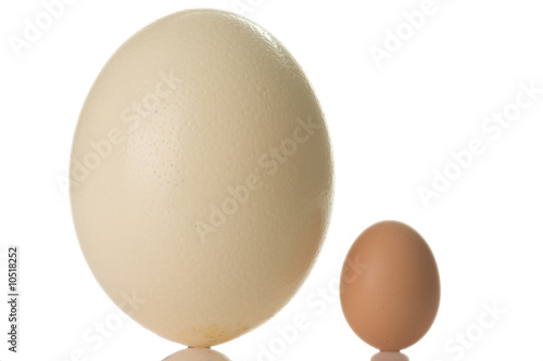 In de dag Struisvogel ostrich egg isolated on white background