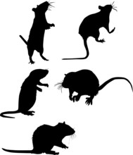 Five Rat Silhouettes