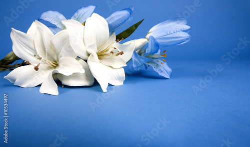 white artificial lilly flower on the blue background Canvas Print