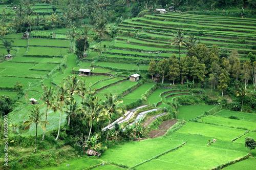 Foto op Aluminium Indonesië rizière
