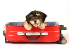 Puppy In The Suitcase