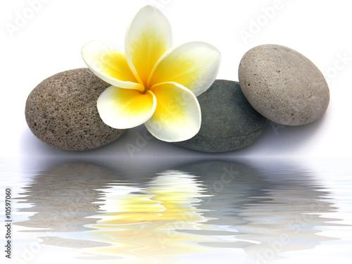 kwiat-frangipani-na-kamykach