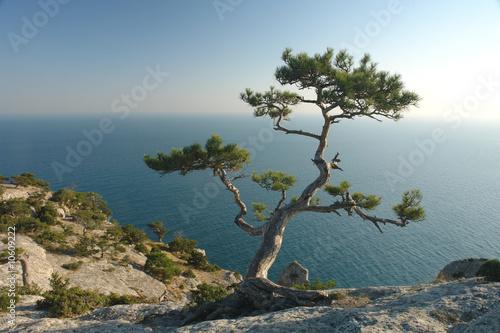 Foto-Leinwand - juniper (von George Anastasiadi)