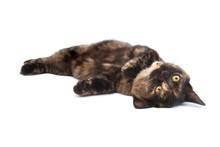 Rolling Kitten