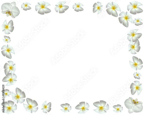 Fleurs D Orchidées Et De Frangipaniers En Bordure De Page