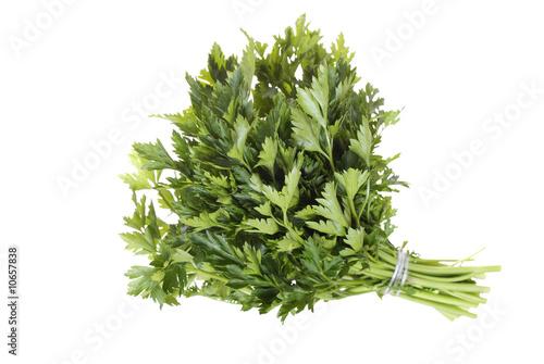Garden Poster Plant parsley