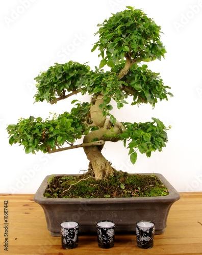 Fotobehang Bonsai bonsai/bougie