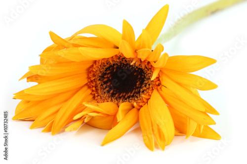 Valokuva  Wilting flower