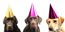 Dogs In Party Hats!