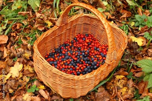 Photo  Basket sloe and wild rose
