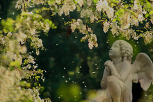 La Prière De L'ange Aux Fleurs D'accacias