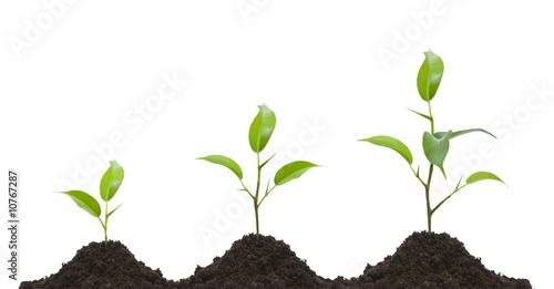 Obraz Evolution of a young plant - fototapety do salonu