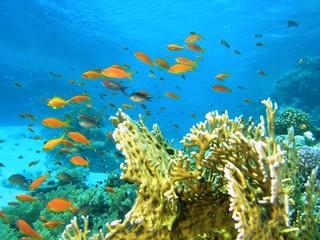 Fototapeta na wymiar Shoal of fish on the coral reef