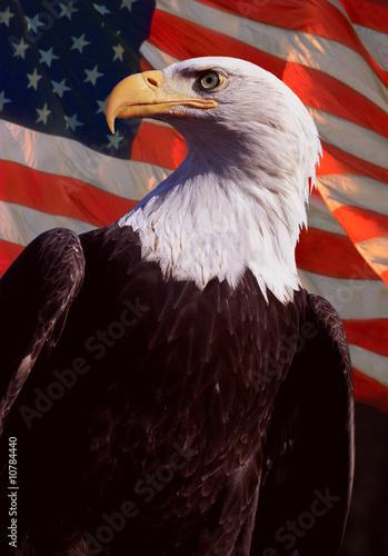 Deurstickers Eagle American Bald Eagle