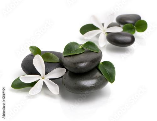 Akustikstoff - white flowers on the wet stones, selective focus