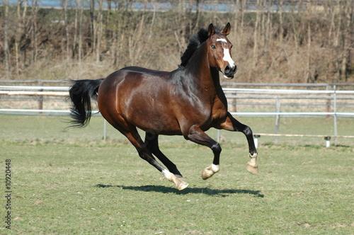 Foto op Canvas Paarden Pony