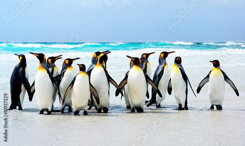 Spoed Fotobehang Pinguin Kings of the Beach