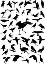Vector Birds Silhouette