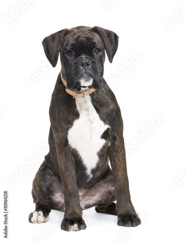 Tuinposter Franse bulldog Boxer