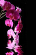 Leinwandbild Motiv Orchidée phalaenopsis rose dans l'eau