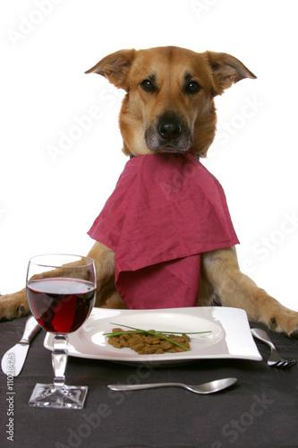 Fotografía  chien a table
