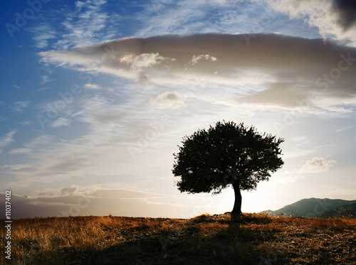 Poster Campagne solitary oak tree at twilight